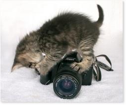 canon kitty