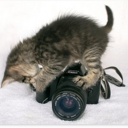 canon kitty